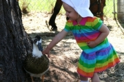 Lucyna Lenart, 19 months, enjoyed petting the ducks during her visit from Calgary, Alberta. Photo Erin Perkins.